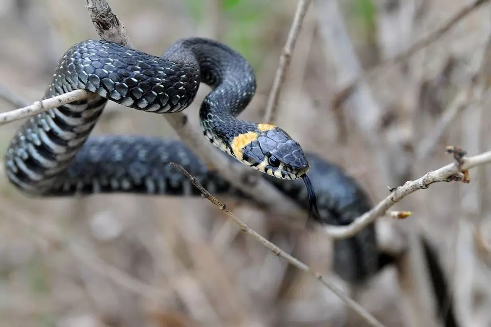 Герпетолог призвал не бояться нашествия змей на Азовском море