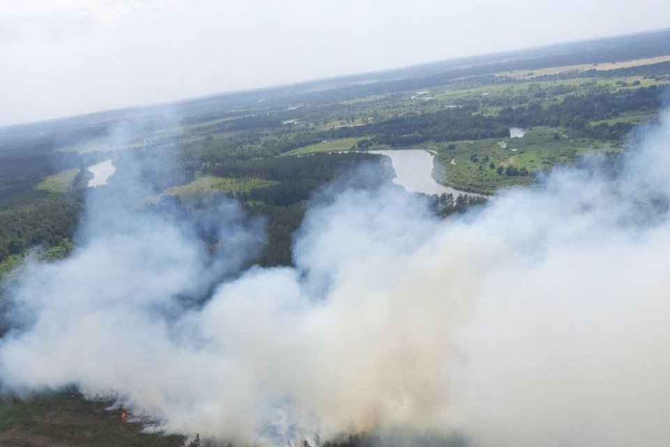 В 113 районах Беларуси введены запреты на посещение леса. Фото: Минлесхоз Беларуси