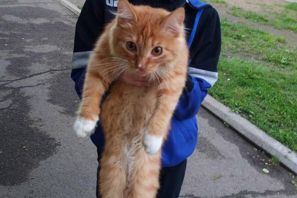 Месть пернатых: атакованного сороками кота пришлось спасать прохожим в Шелехове. Фото: Анастасия Москвитина