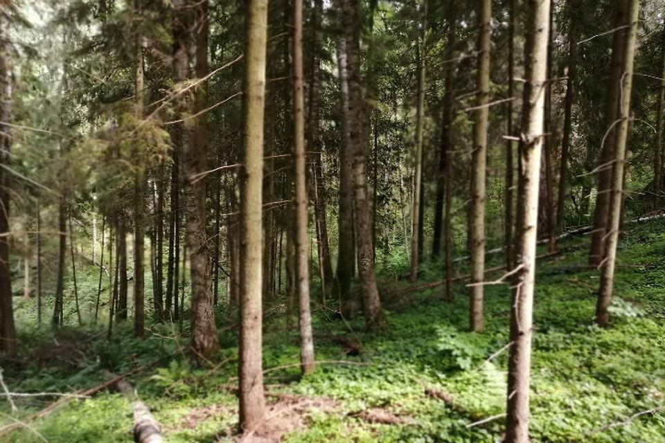 Бор является особо охраняемым памятником природы