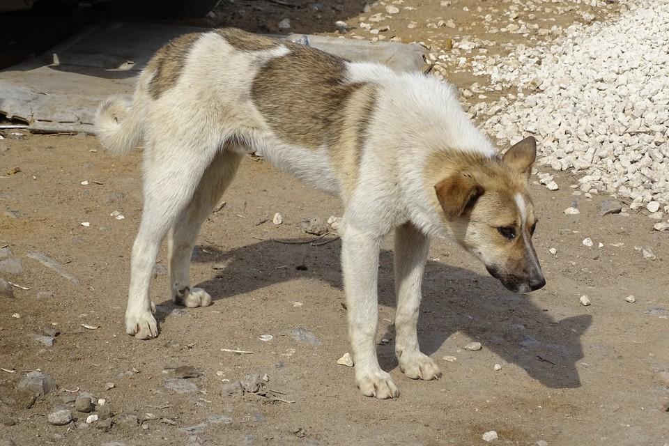 В Липецке подтвердился случай бешенства у собаки