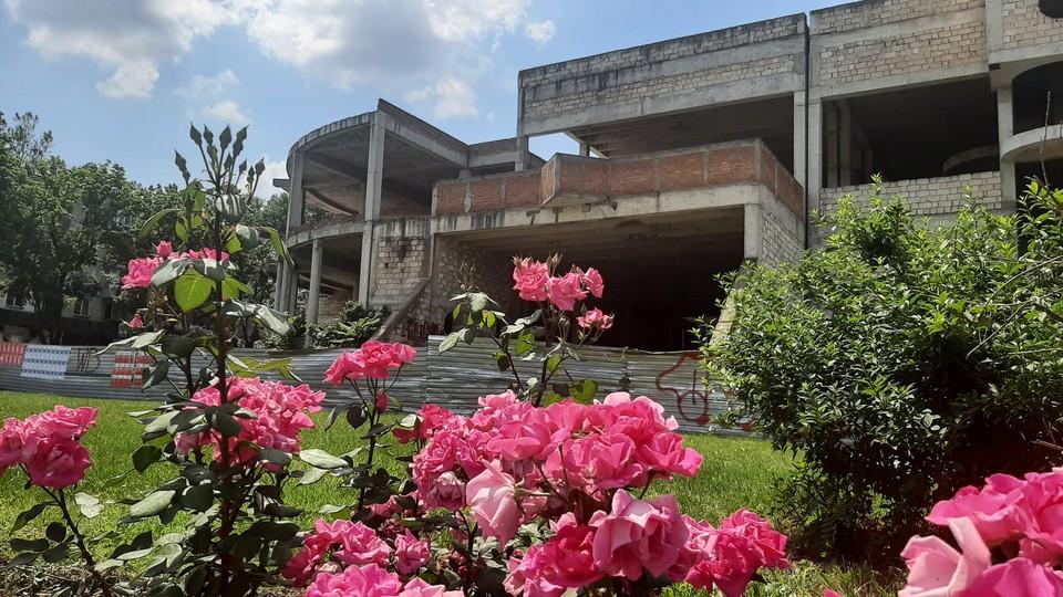 Розы на фоне заброшенного здания