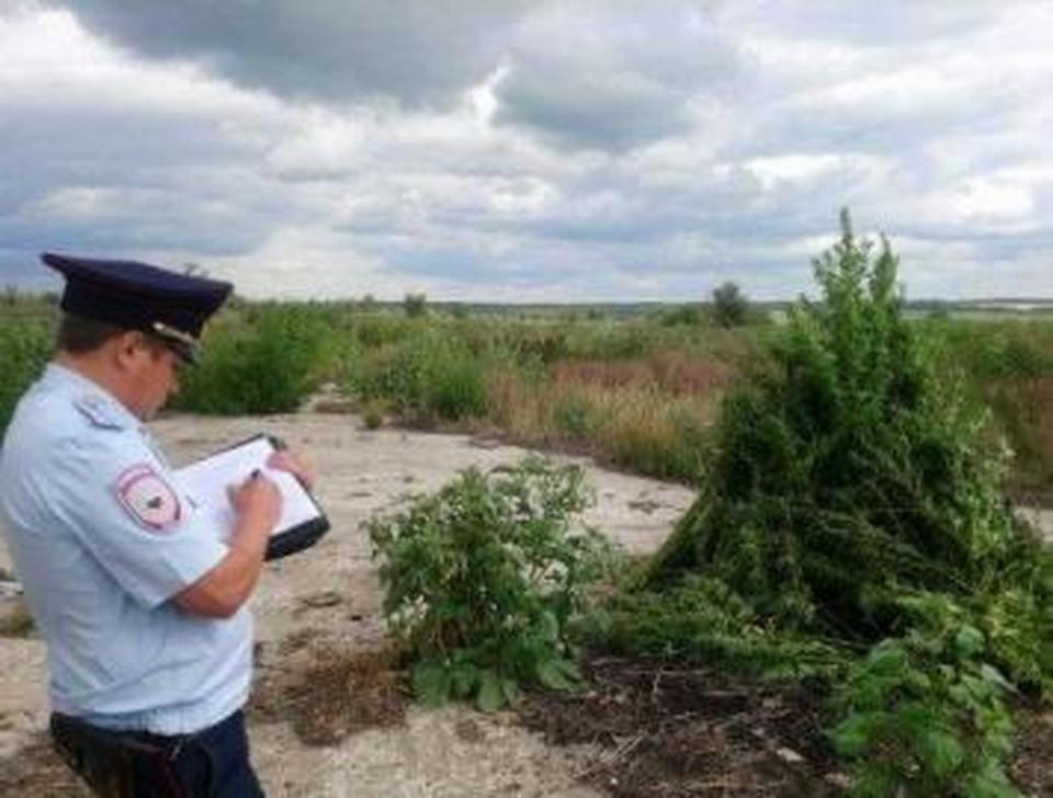 Заросли наркосодержащего растения правоохранители обнаружили во время профилактического рейда. Фото: ГУ МВД по Самарской области