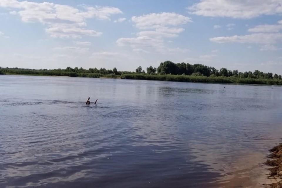 Отец пошел купаться с тремя детьми, отвлекся, и дети чуть не утонули. Фото: МЧС.