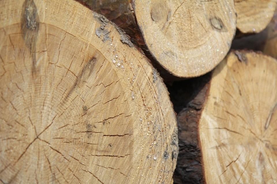 Незаконную рубку деревьев на 1,6 миллиона рублей обнаружили прокуроры в Иркутской области