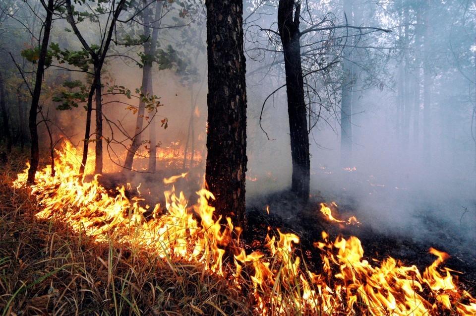 Возгорания в лесу для Томской области не новость. Специалисты склонны считать, что их в ряде случаев провоцирует неосторожное обращение жителей с огнем и сельхозпалы. Власти призывают население быть предельно внимательным и осторожным.