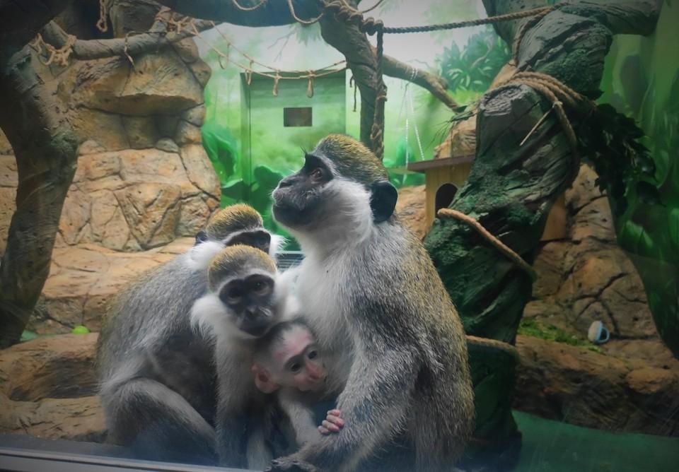 Малышу пока не придумали кличку. Фото: Сахалинский зооботанический парк
