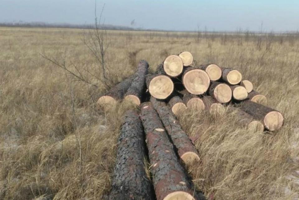 В хабаровском крае под суд отправится «черный лесоруб». Фото: Комитет лесного хозяйства правительства Хабаровского края