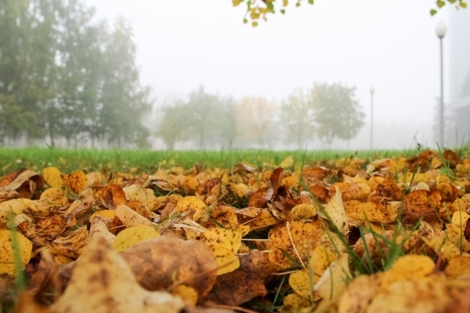 Жителям Москвы пообещали бабье лето и продолжительную золотую осень в 2021 году