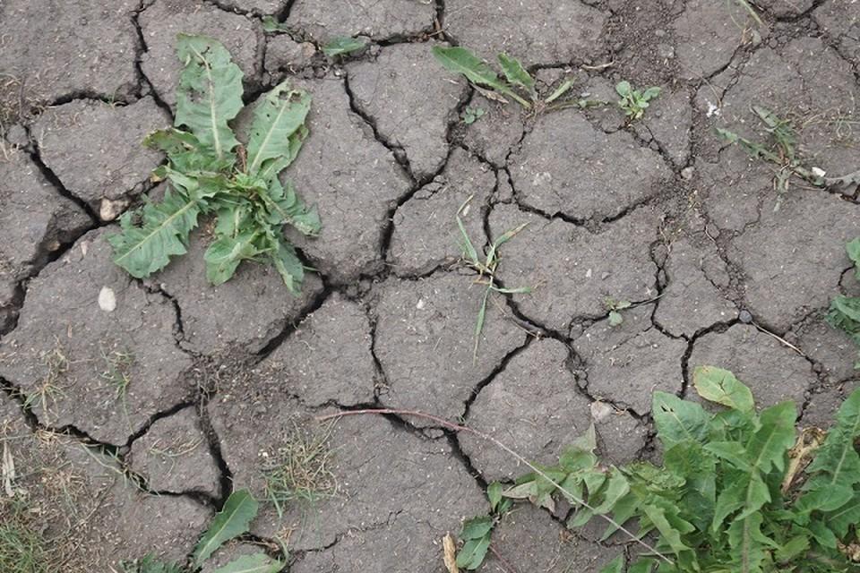 Чтобы поправить ситуацию нужен затяжной дождь, которые должен идти минимум сутки.