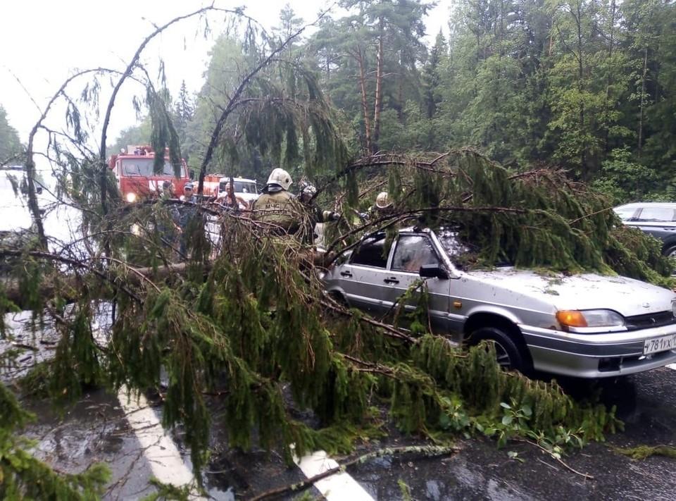 На трассе М-10 на машину упало дерево Фото: ГУ МЧС России по Тверской области