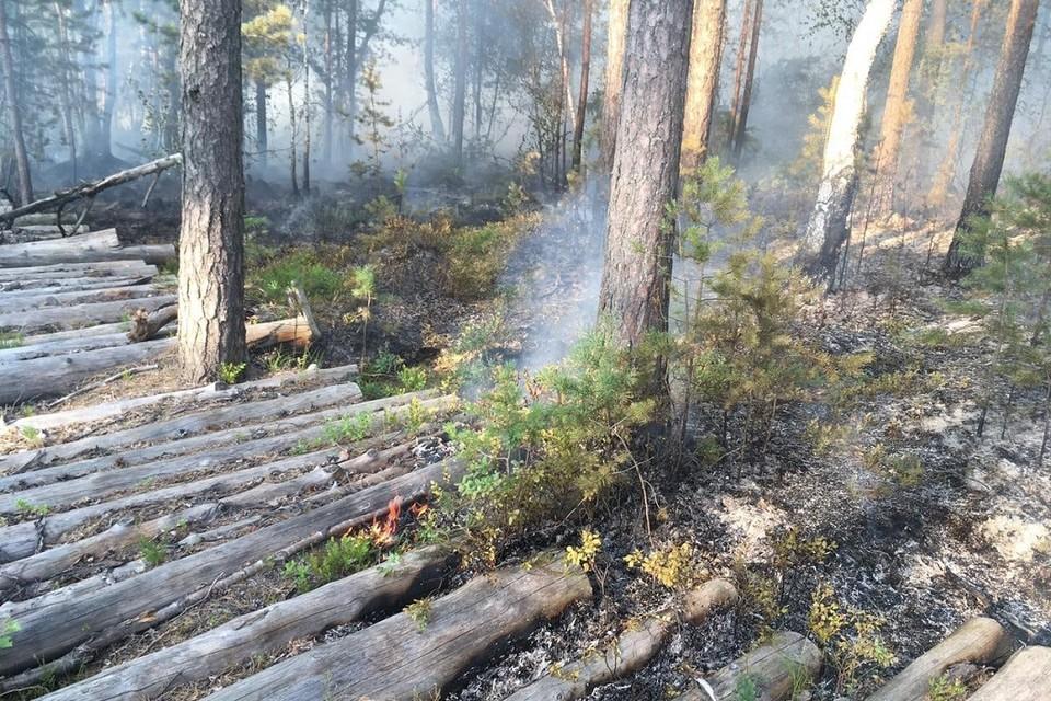 В Сосновом Бору тлеет и горит две тысячи квадратных метров торфяной подложки леса. Фото: vk.com/meriasosnovybor