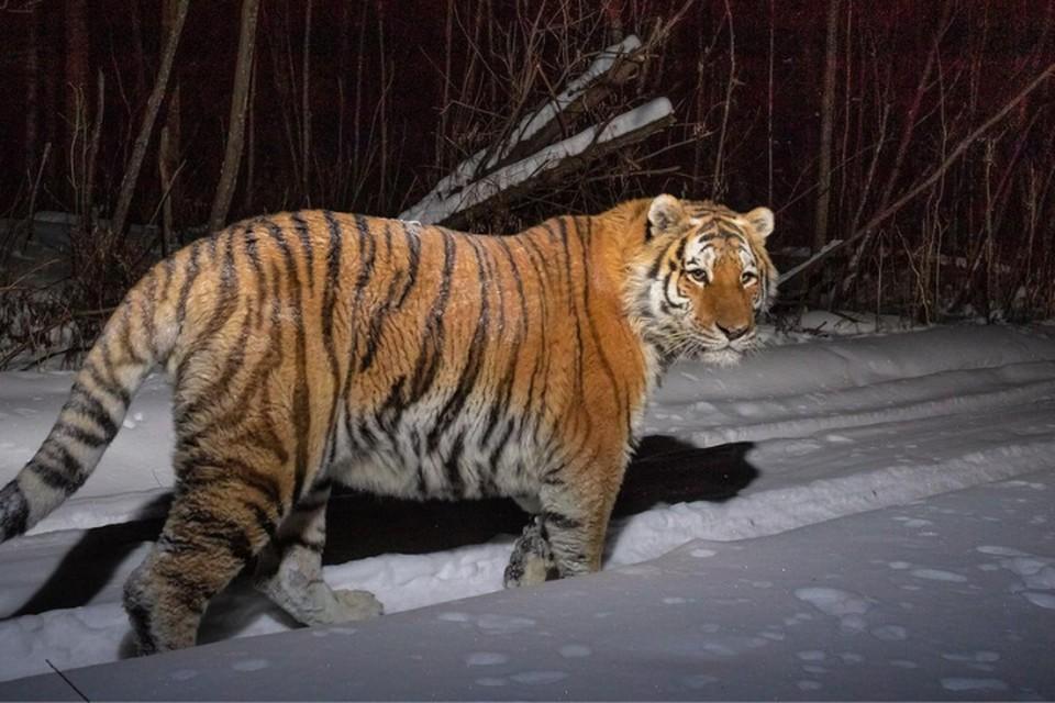 Саша Фонсека ради того, чтобы получить снимок отправился в тайгу в лютый мороз. Фото:Sascha Fonseca