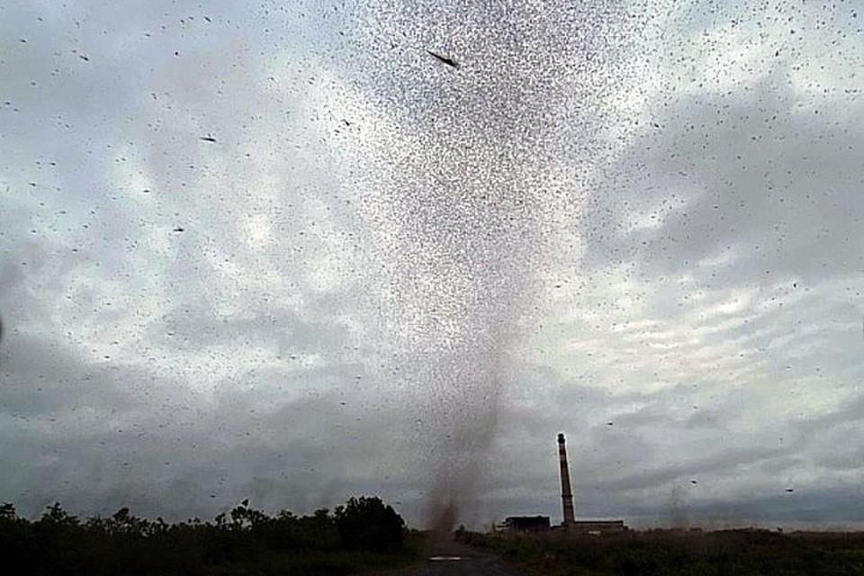 Тучи из насекомых кружат на Камчатке. Фото: kamchatinfo.ru.