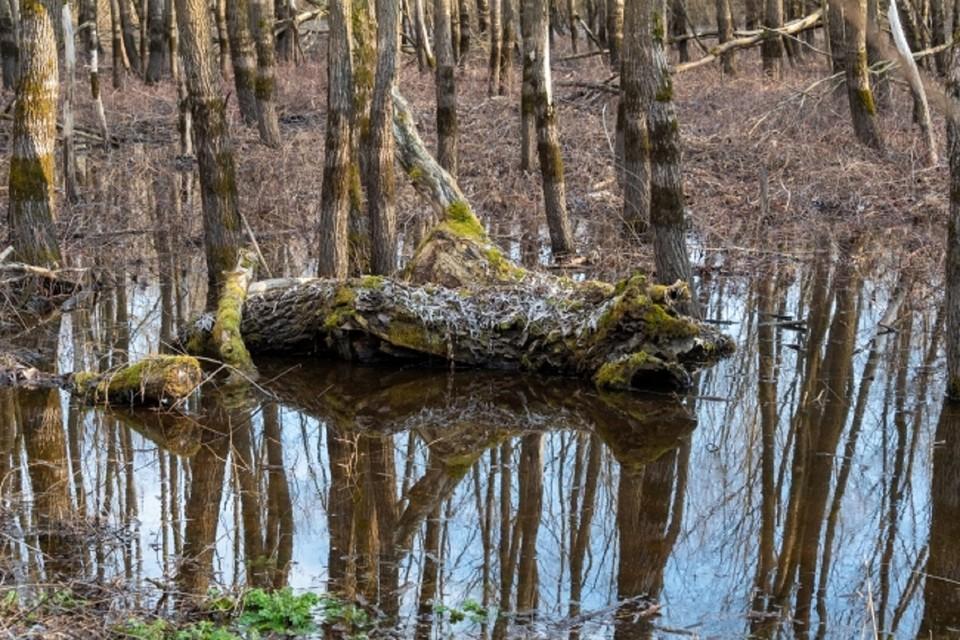 В Ростовской области прокуратура потребовала снести лесные коттеджи
