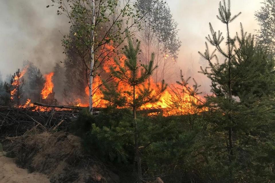 Лесной пожар 15 июля 2021 года в Рязанской области (Солотчинское лесничество). Фото: minprirody.ryazangov.ru