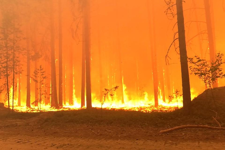 Буквально пару дней назад вся страна следила, как в Карелии из поселка Найстенъярви срочно эвакуируют людей, на которых из леса катится лавина огня. Фото: Максим Зверев/Сампо ТВ 360/ТАСС