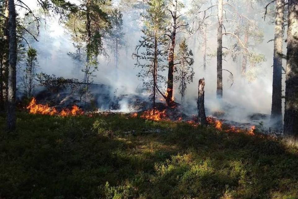 Площадь лесных пожаров в Карелии превысила 5,8 тысяч гектаров / Фото: Оперштаб Карелии