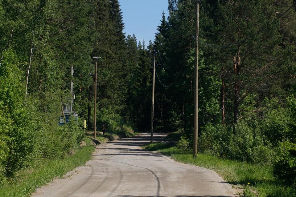 Рослесхоз назвал нецелесообразным приватизацию лесов России