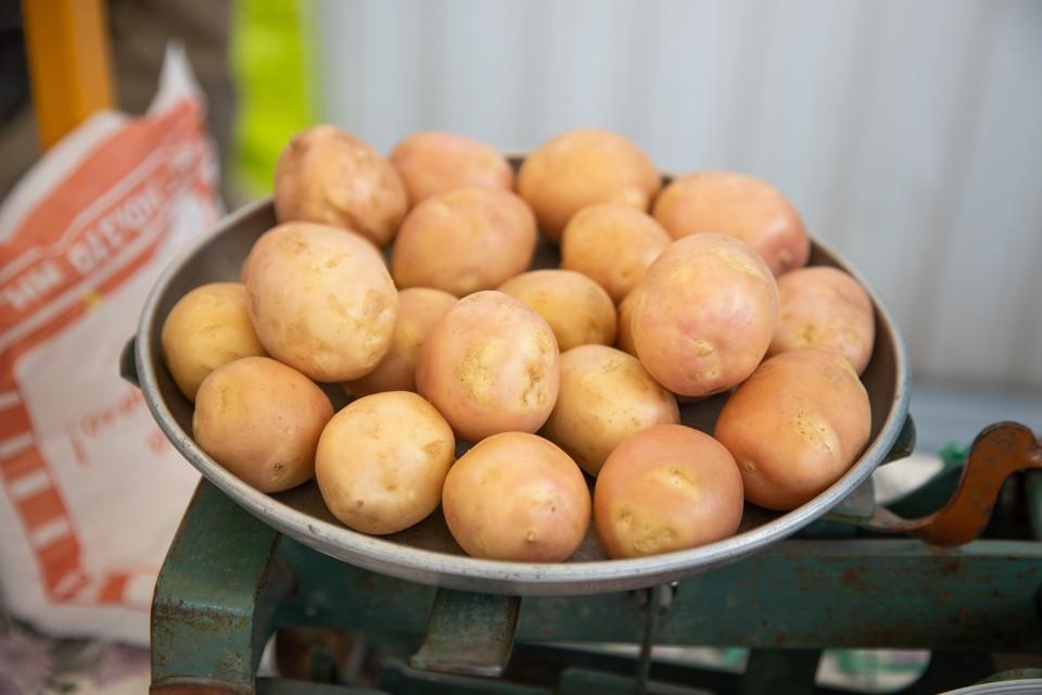 В среднем килограмм картофеля сейчас обходится волгоградцам в 39 с небольшим рублей