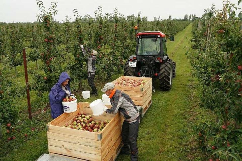 В Калининградской области за счет грантов удается наращивать объемы производства сельскохозяйственной продукции, особенно зерна и овощей.