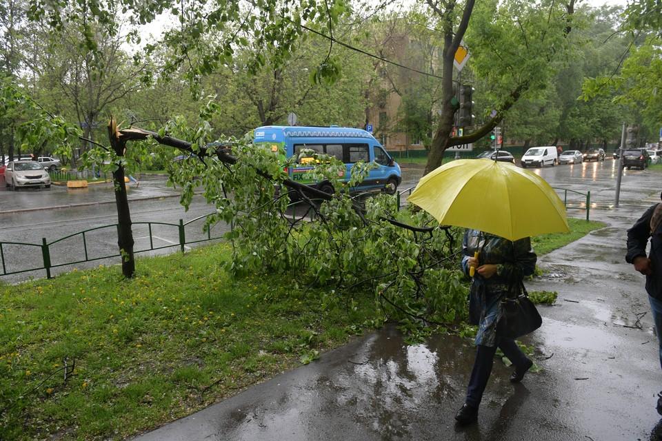 Сильные дожди пройдут в Смоленской области 1 сентября.