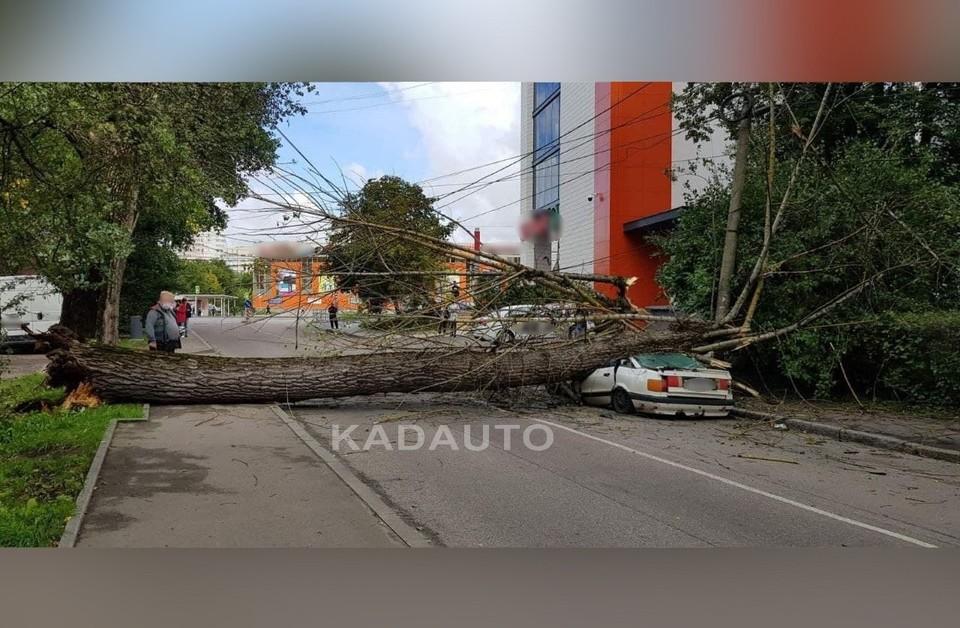 Раздавленный деревом автомобиль