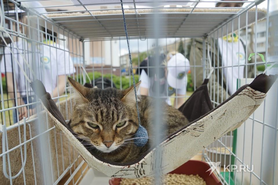 Кошкам, как и собакам, необходим уход грумера
