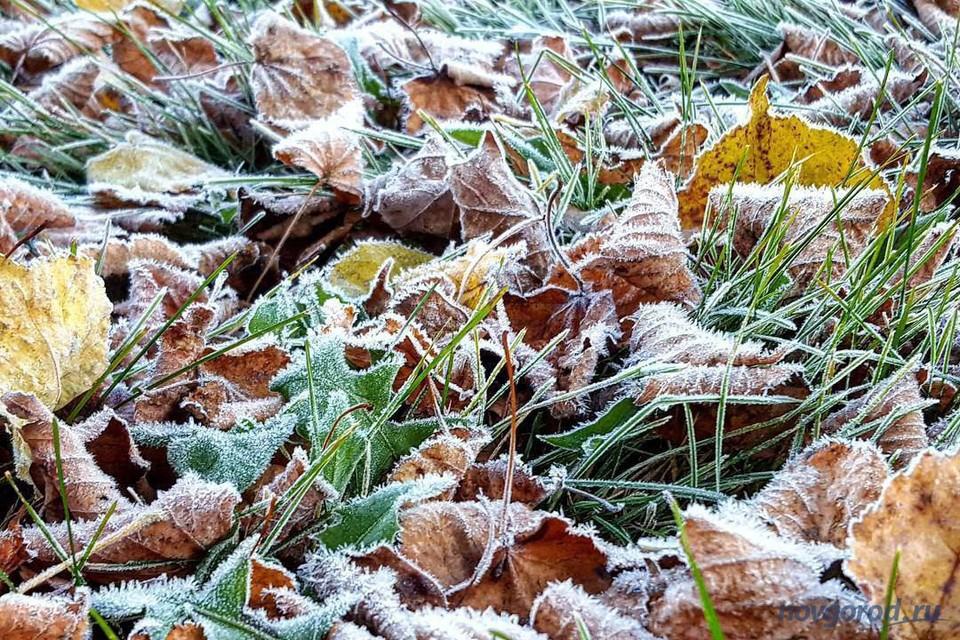 В Беларусь придут заморозки. Уже 5 сентября! Фото: news.novgorod.ru.