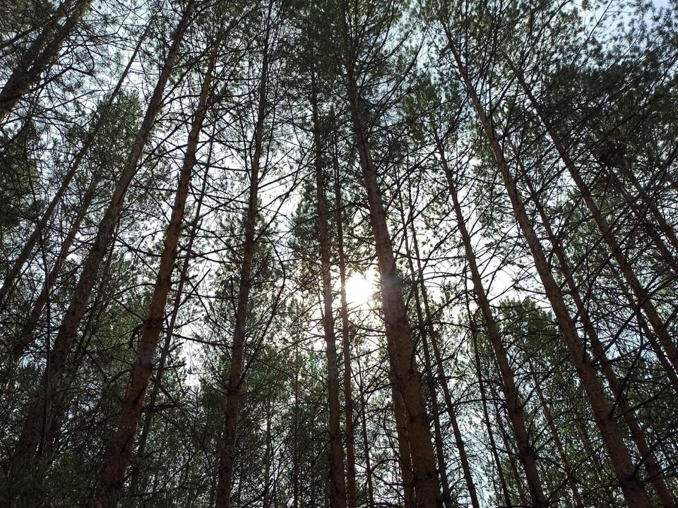 Тюменские чиновники решили пожертвовать средства из собственного содержания на защиту лесов