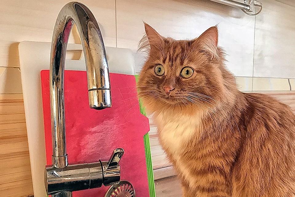 Отключение горячей воды в Иркутске: адреса, даты, где с 5 по 10 сентября пройдут ремонты.