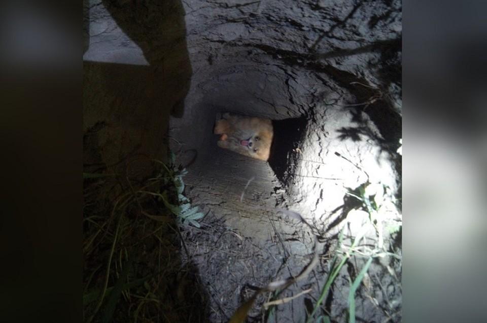 Спасатели закрыли яму. в которую упал шпиц, доской и несколькими кирпичами. Фото: паблик «ВКонтакте» «ЗооСпас»