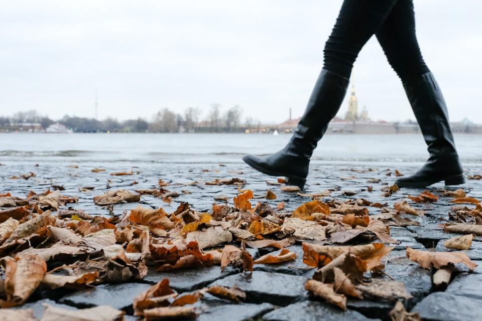 Тепло и дожди придут в Петербург 6 сентября