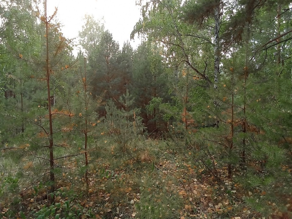 Погода на Ямале на 7 сентября.