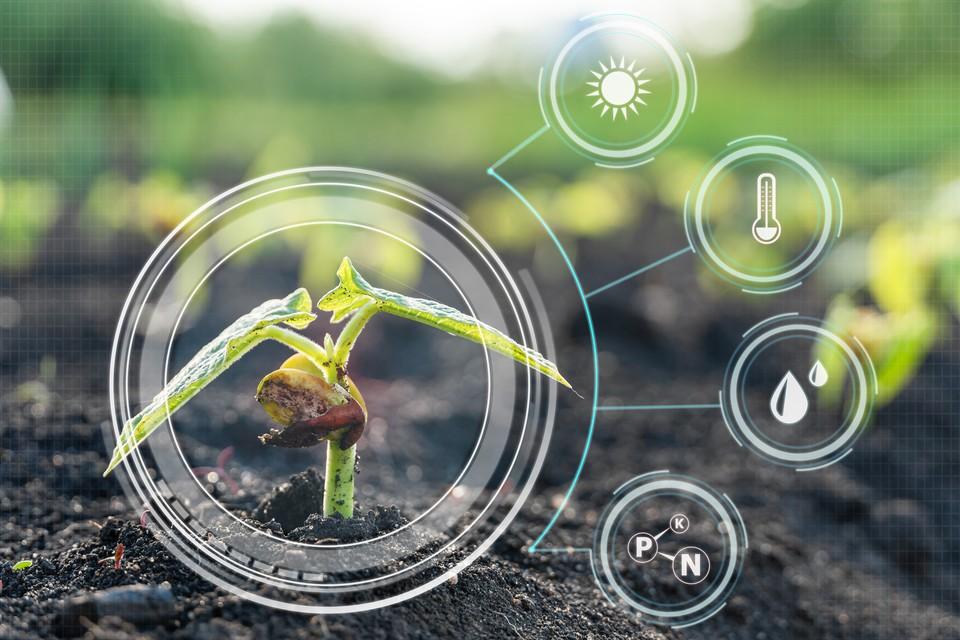 Ученые всерьез говорят о способности растений думать.