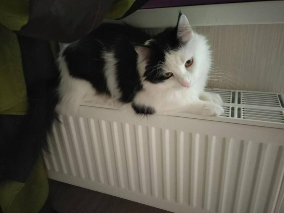 Тепло в наши дома приходит постепенно.