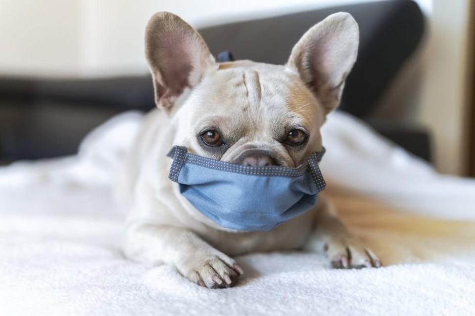 В Великобритании массово отказываются от щенков, приобретенных в период пандемии. Фото: rg.ru