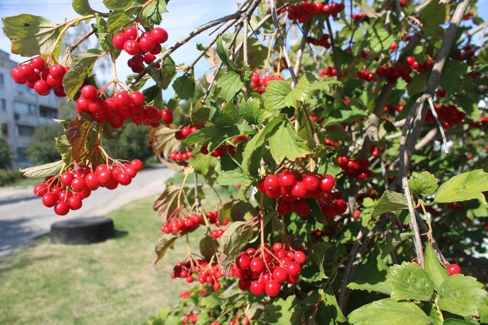 В Крыму хозяйничает ранняя осень.