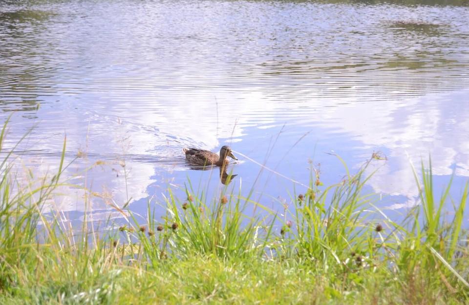 В озере был обнаружен бытовой хлам.