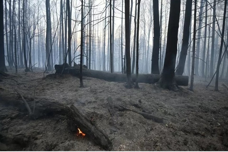 На сегодняшний день в регионе ввели особый противопожарный режим