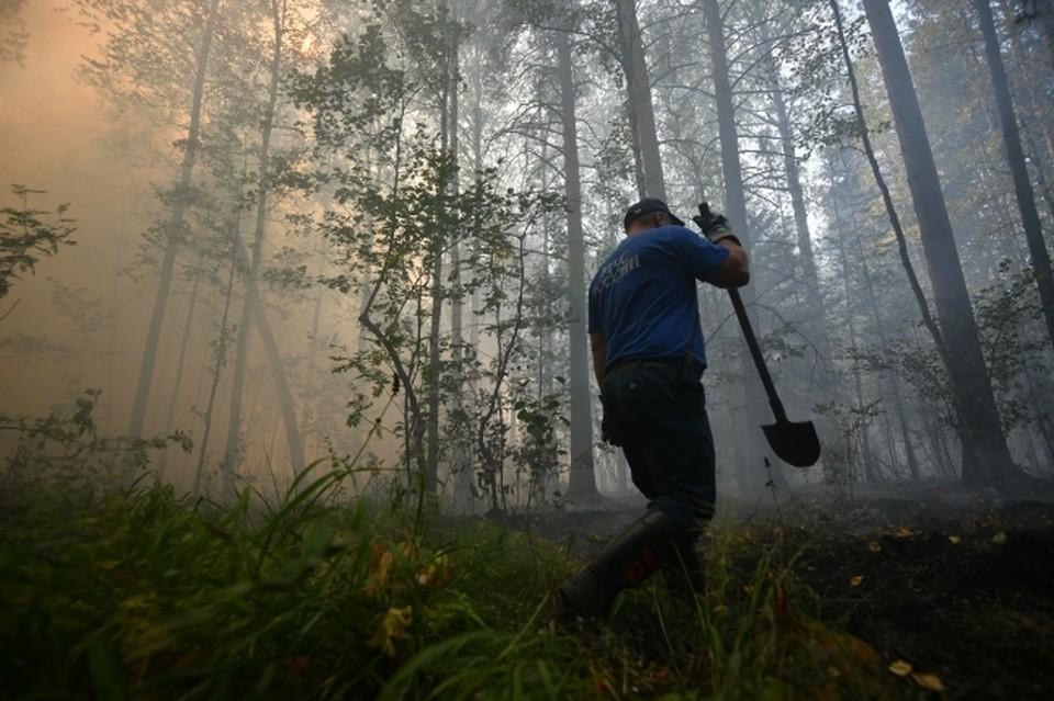 Всего в этом году на территории Амурской области зарегистрировано 215 природных пожаров