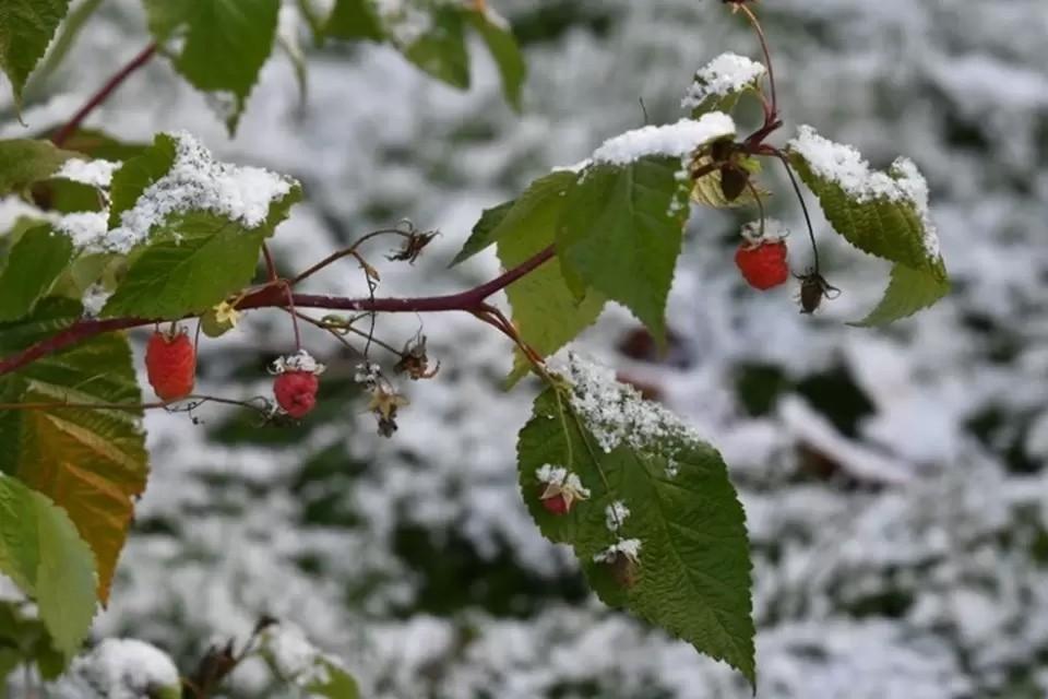 Первые морозы возможны в середине сентября.