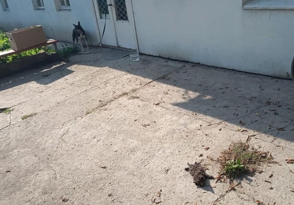 Оставленных на пороге тульского приюта для животных котят в коробке растерзали бездомные собаки