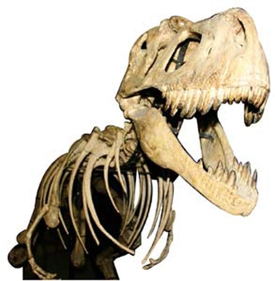 200 млн. лет назад эти твари, наверное, не догадывались, что их современники будут жить в метрополитене.
