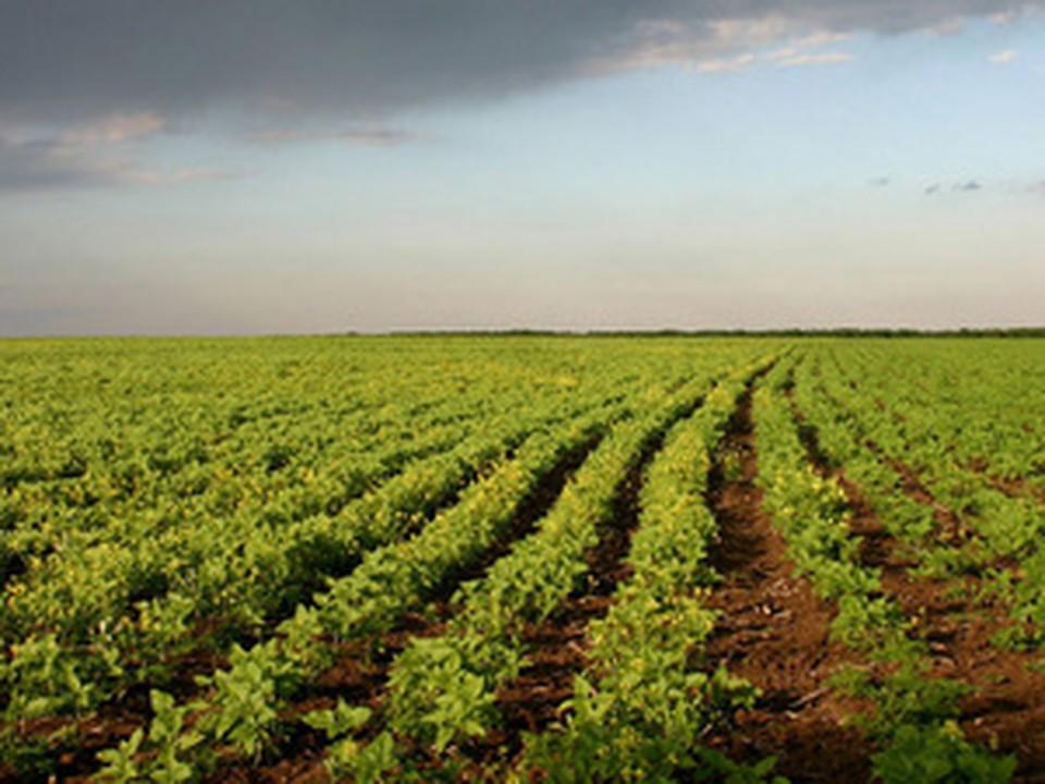 землю нужно не только обрабатывать, но и регистрировать