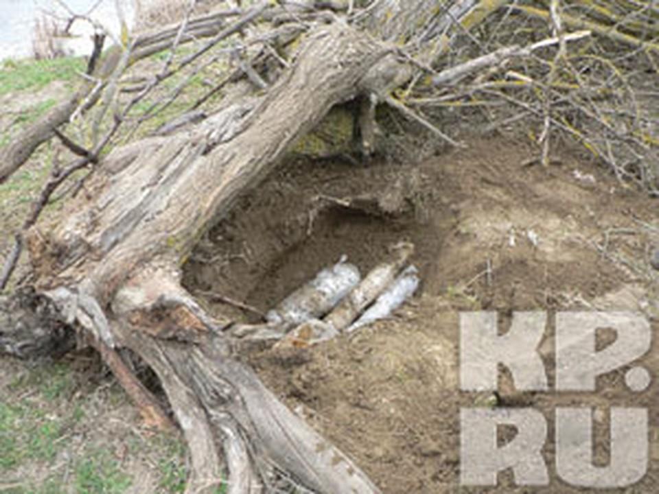 В Дагестане нашли схрон боевиков.