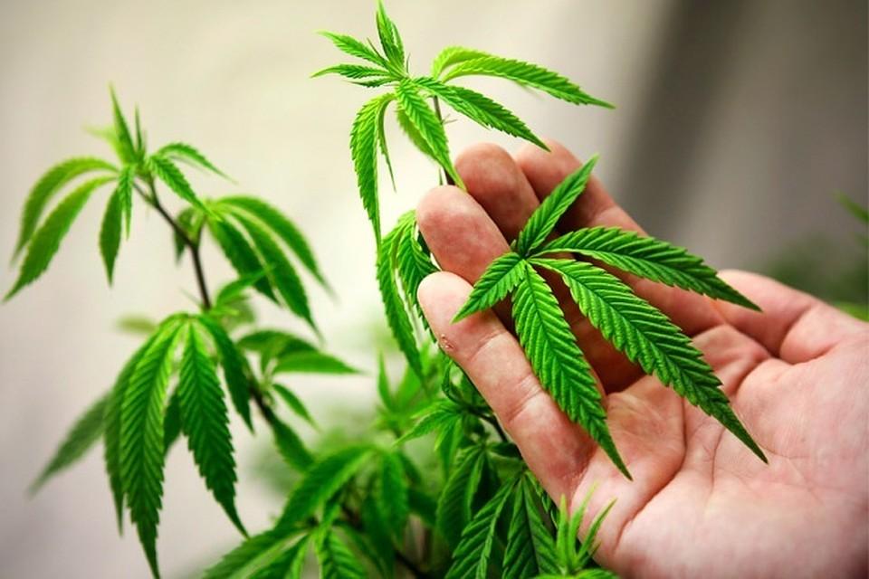 Марихуана измена где лечат марихуаной