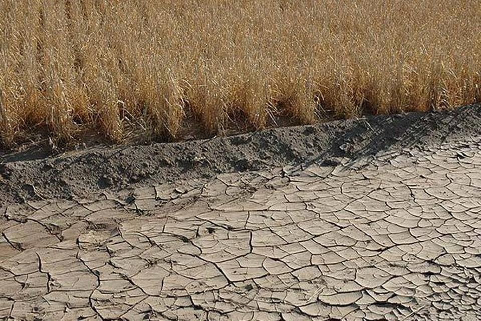 Перекрытие Северо-Крымского канала может оставить полуостров без части урожая.