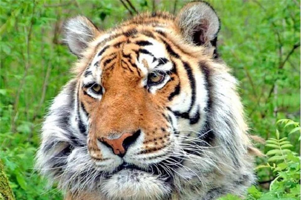 Картинки табличка с названием тигр его кличка и родина, картинки красивые открытки
