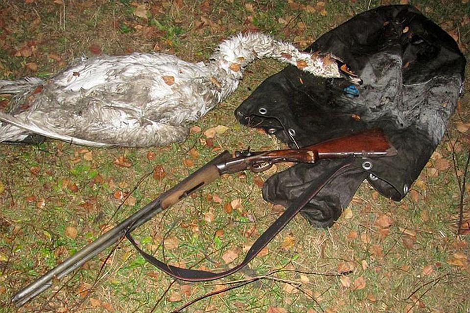 Парень хотел съесть лебедя и попал на 12,5 миллионов. ФОТО: gosinspekciya.gov.by